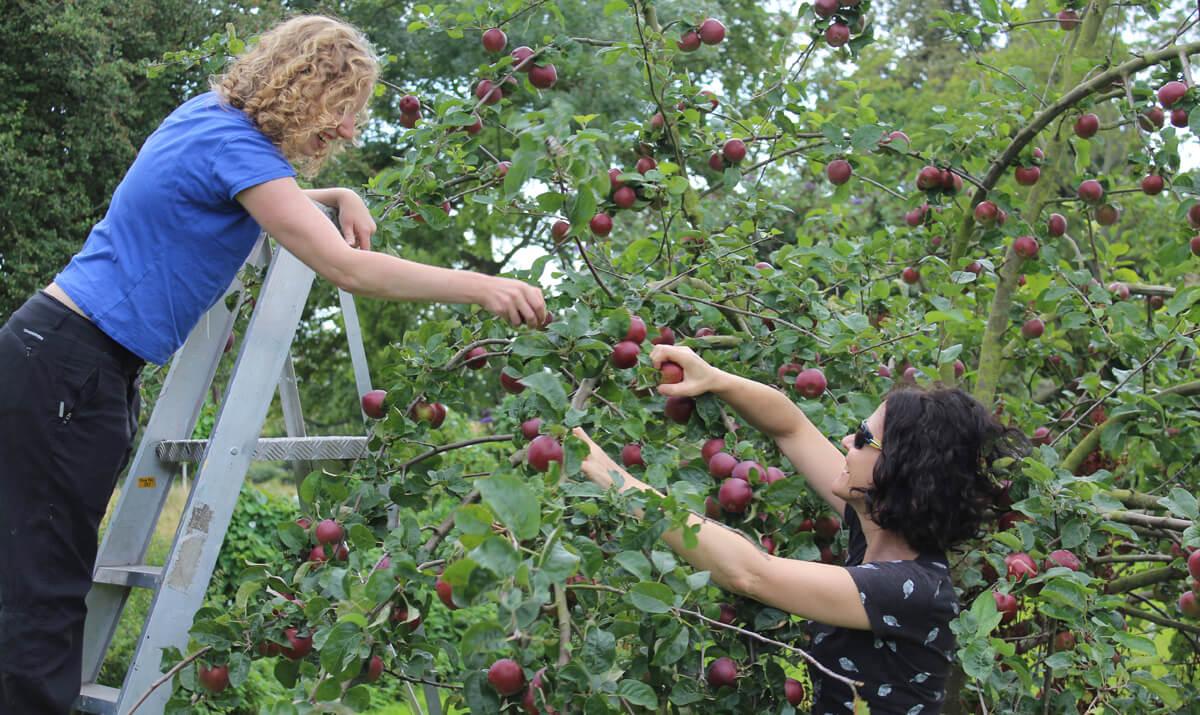 Regather Farm - Orchard
