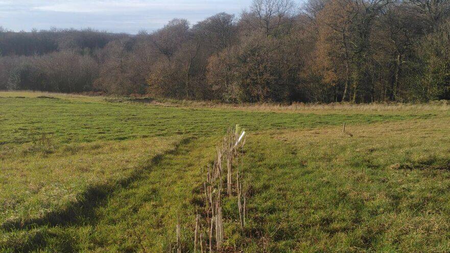 Regather Farm Hedgerow Planting